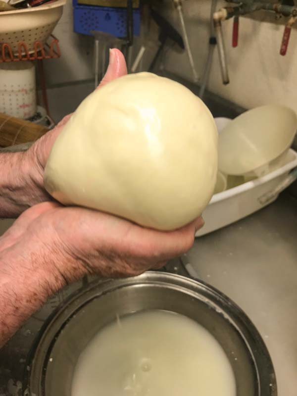 Forming ball for Mozzarella cheese